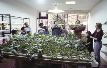 Haha, Flood, A Volunteer Network for Active Participation in Healthcare, Chicago 1992-95, commissioned by Sculpture Chicago's Culture in Action. A group of participants built and maintained a hydroponic garden in a storefront by cultivating vegetables and therapeutic herbs for people with HIV.